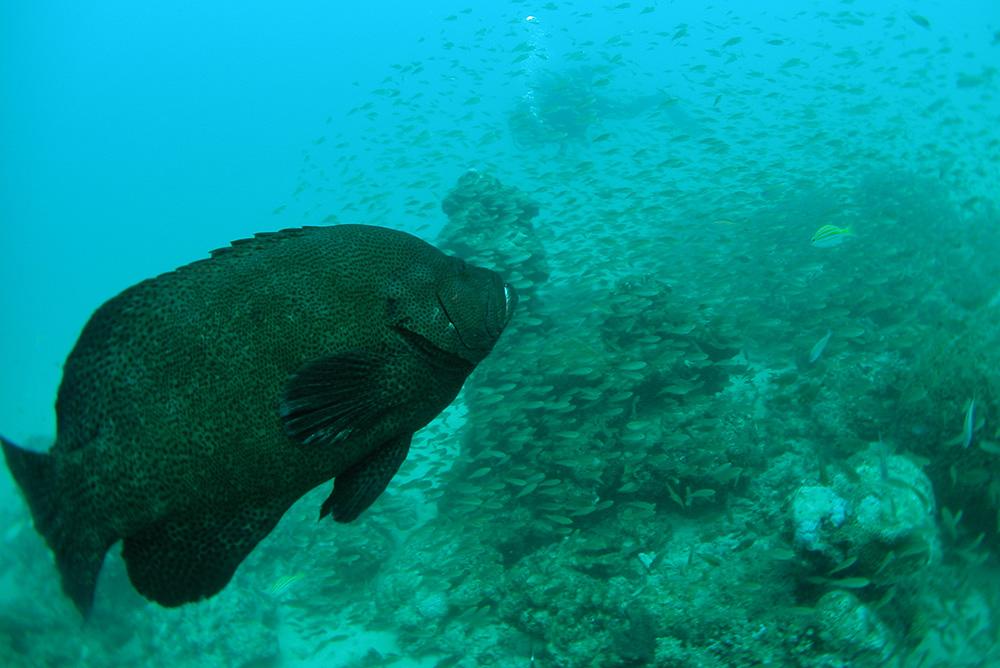 ロックフィッシュにとって小魚(ベイトフィッシュ)は肉のような存在?小魚系のワームで釣れる理由や選択術