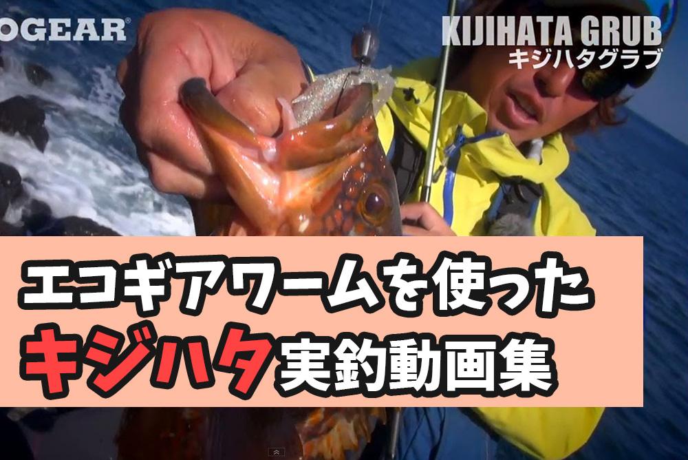 エコギアワームを使ったキジハタ(アコウ)実釣動画 折本隆由 土居大紀