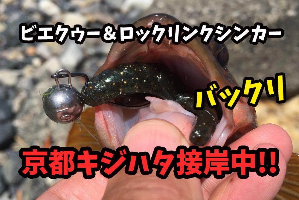 2017年6月京都キジハタ(アコウ)接岸中!日本海側ロックフィシュ釣行記録