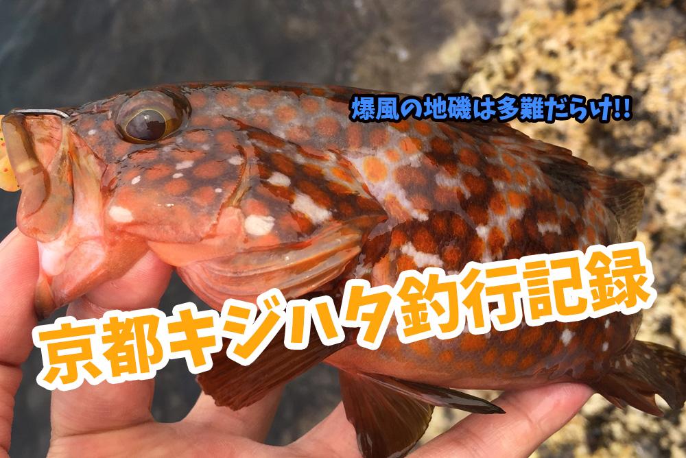 爆風の地磯でキジハタ(アコウ)をゲット!京都(日本海側)ロックフィッシュ釣行記録