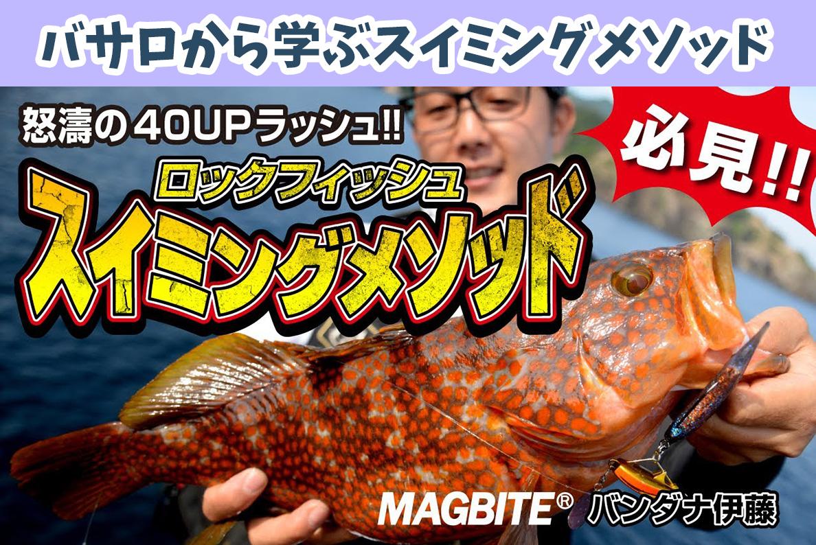 マグバイト(MAGBITE)から学ぶロックフィッシュゲーム!バサロ(スイミング)メインのキジハタ(アコウ)の釣り動画